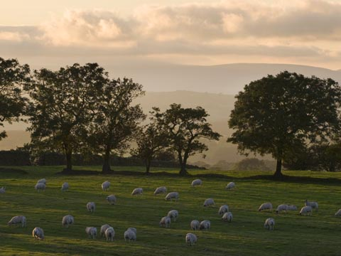 Ribble Valley